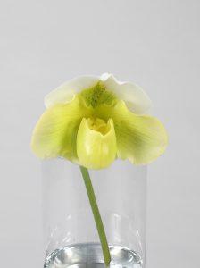 (一社)花の国日本協議会「フラワーバレンタイン賞」